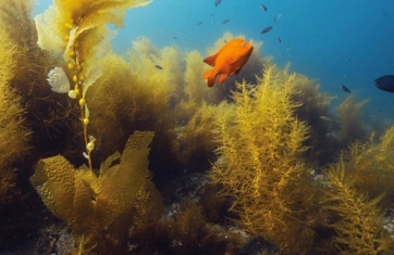 Red Sea 4